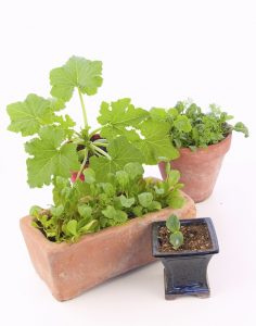 How to Grow an Indoor Garden